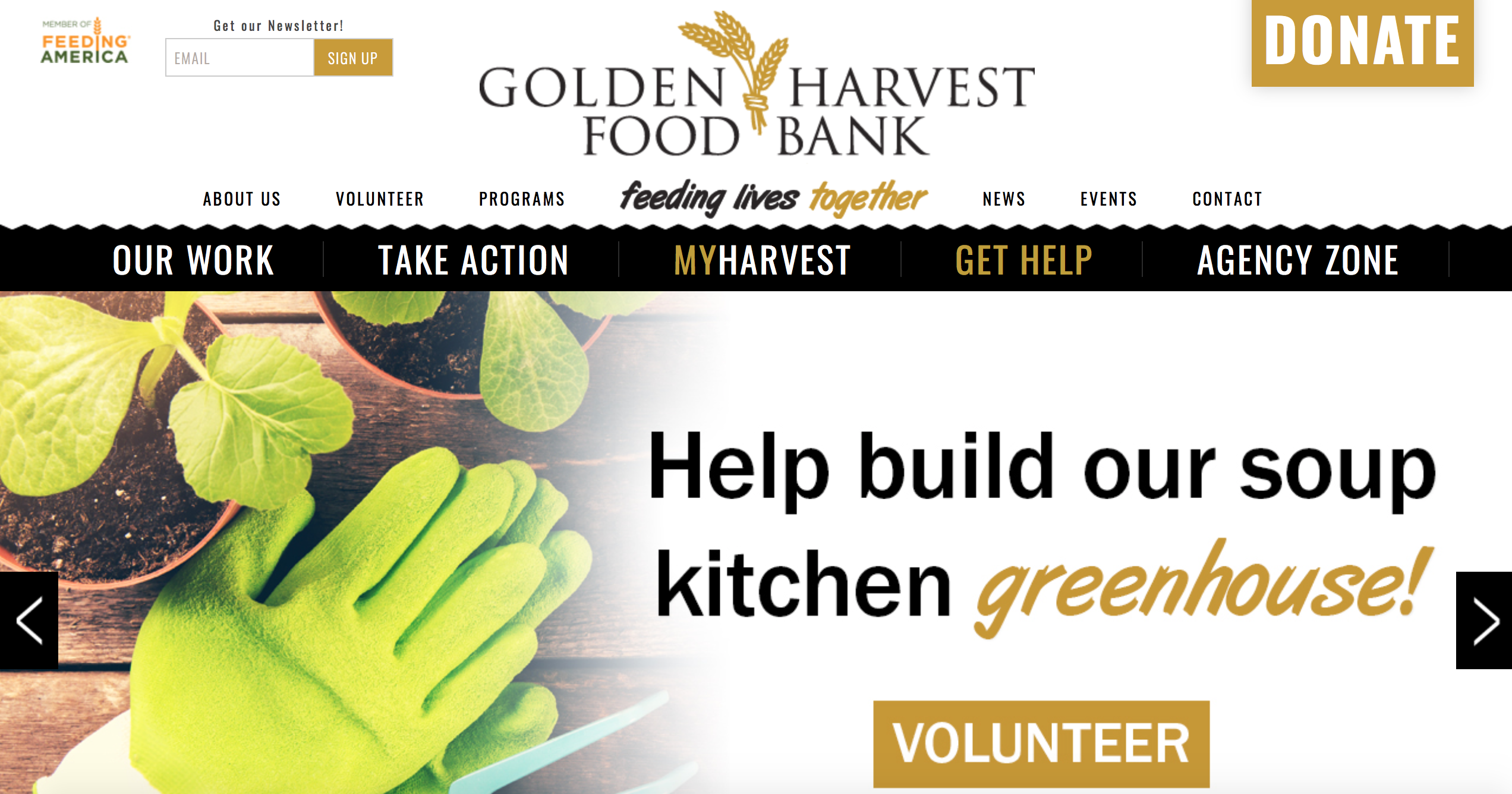 Golden Harvest header